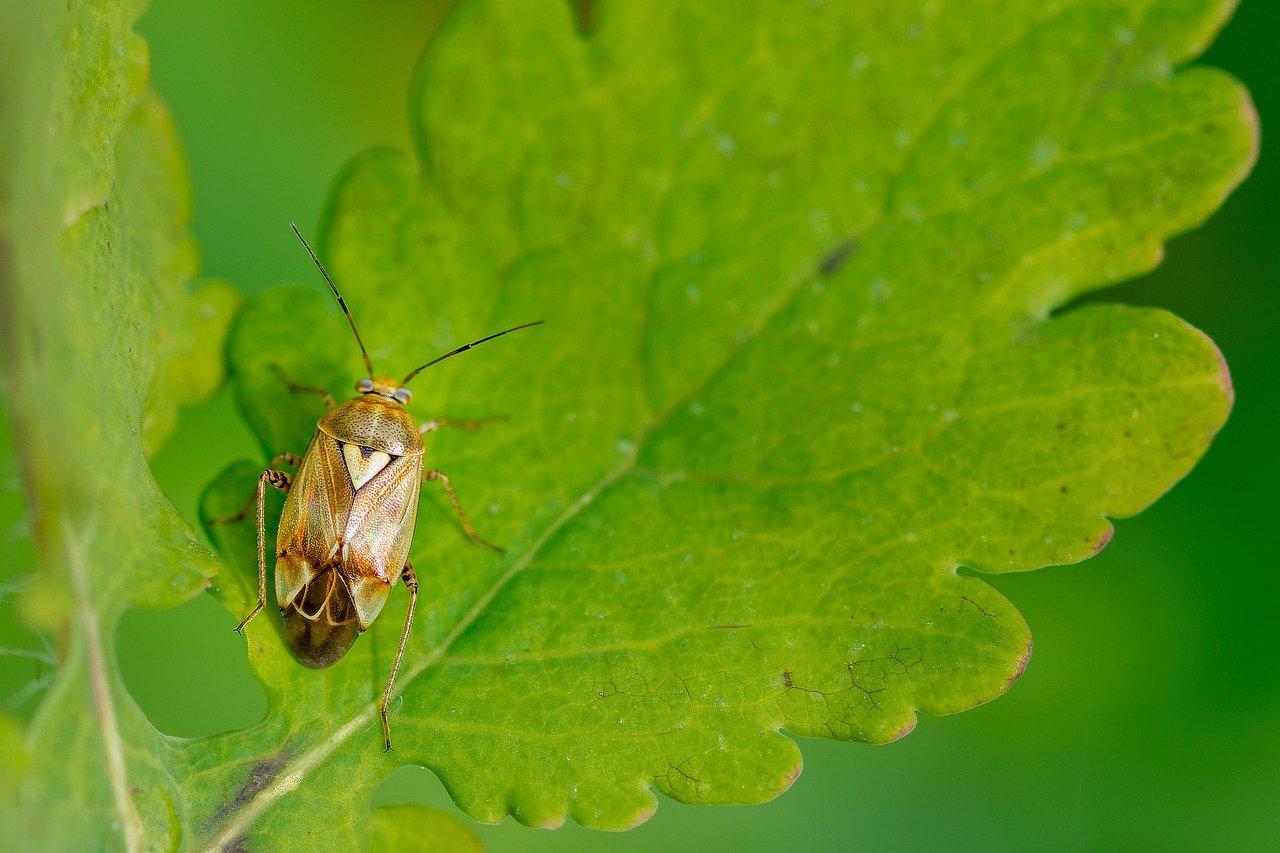 Common pests that destroy plants and teak garden furniture