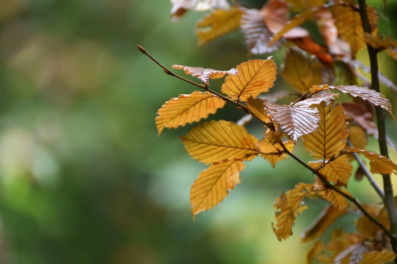 How to make sure springtime-planted tree thrives
